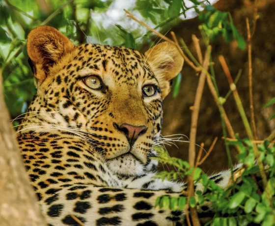 Thrilling safari in the Lower Zambezi