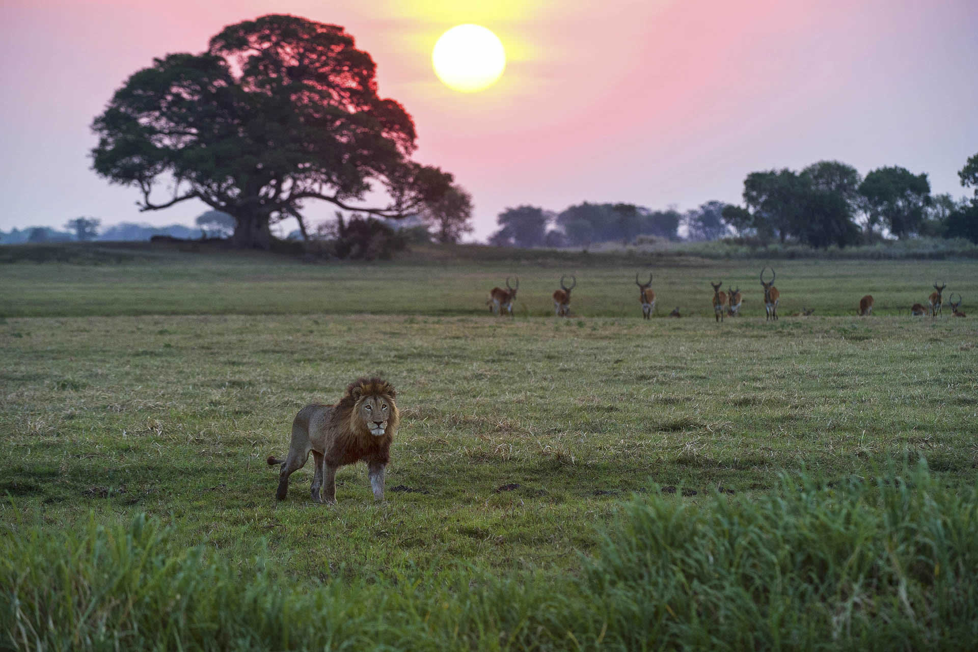 Busanga Camp wildlife