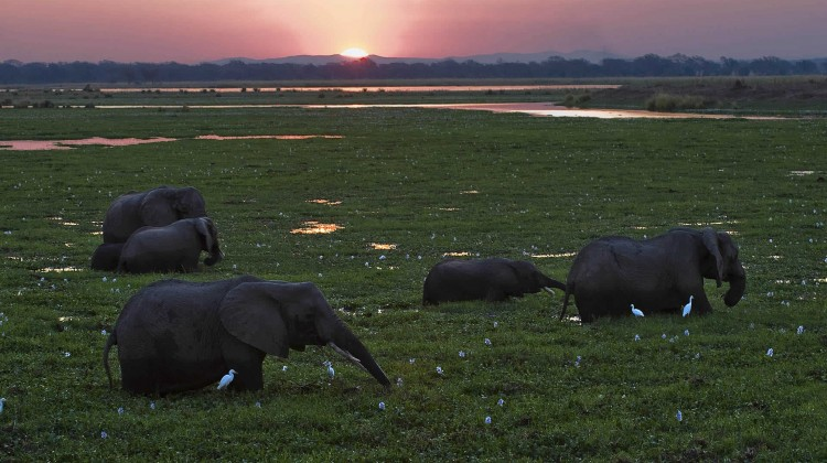 Mana Pools, a magnet for the adventurous