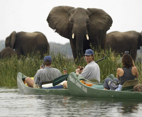 Canoe safaris