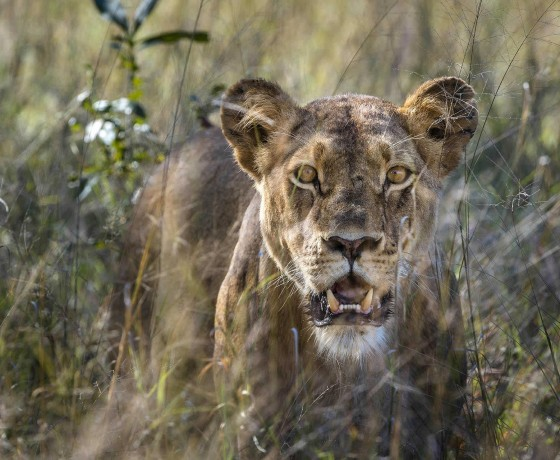 Hwange, Africa's oldest safari park