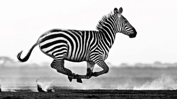 10 Best African Wildlife Photographs