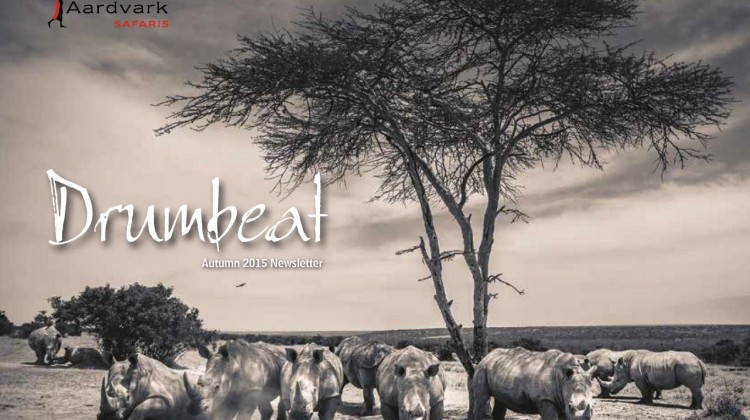 Drumbeat Autumn 2014 front cover crash of rhino black and white