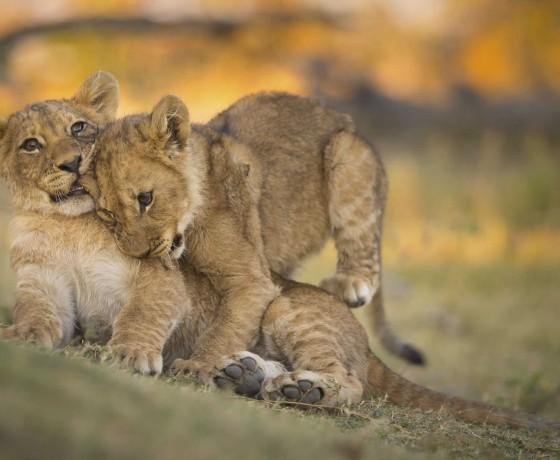 Specialist photographic safaris in Zambia