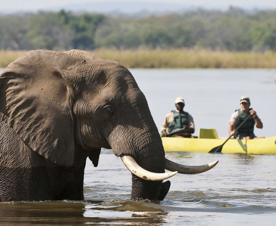 Camping and canoe safari in Zimbabwe