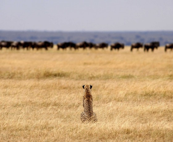 Where to see the wildebeest migration