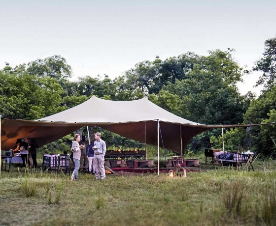 Activities on a mobile safari