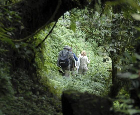 Gorilla tracking safety