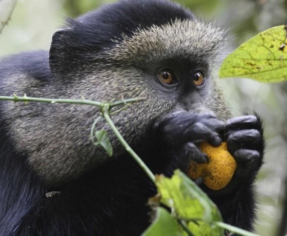 Other primate safaris