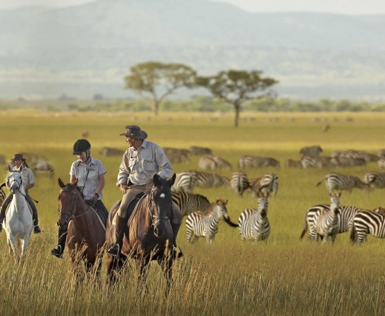 Medium paced riding safaris