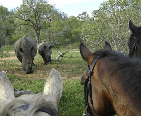 Do riding safaris have a maximum or minimum rider age?