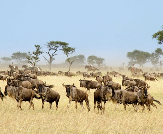 Fast paced riding safaris