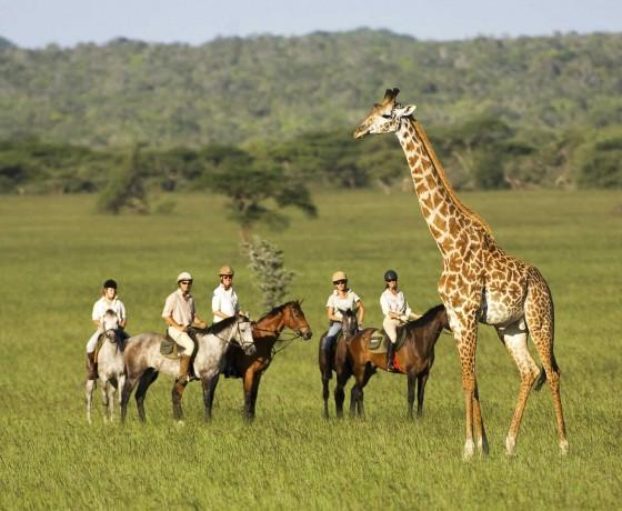 Riding safari safety