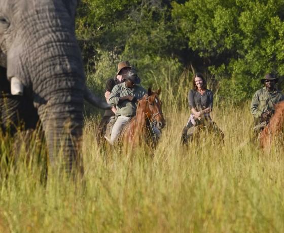 When to take a riding safari