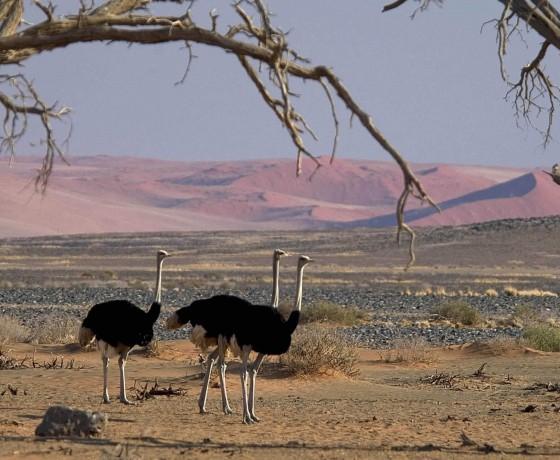 Self drive safaris in Namibia