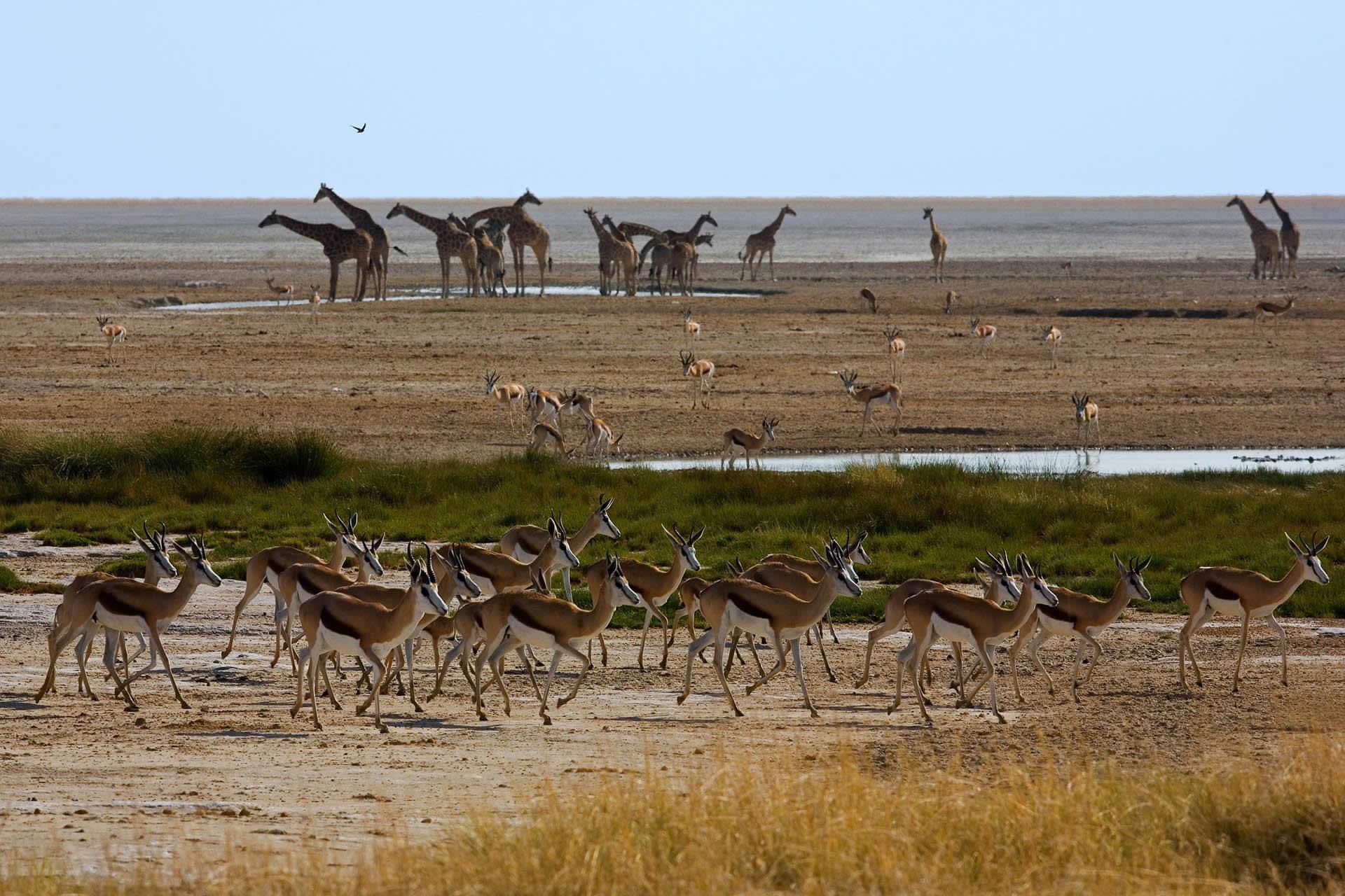 Self Drive Adventures - South Africa, Namibia & Botswana