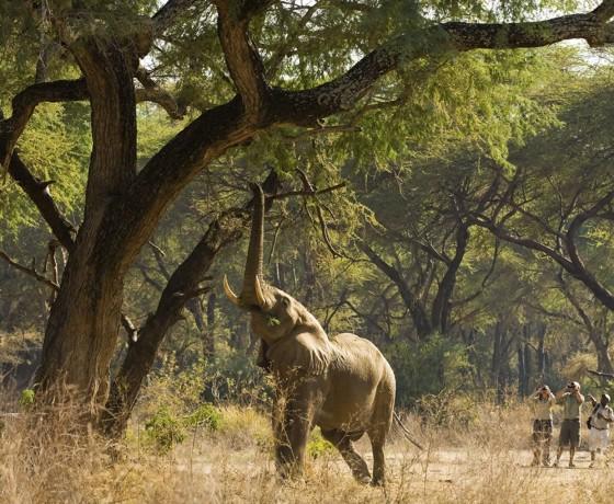 Types of walking safari