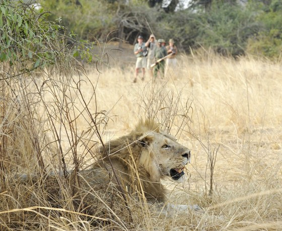 Safety on a walking safari