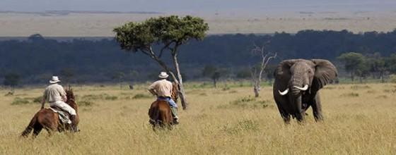 horse riding safari with elephant