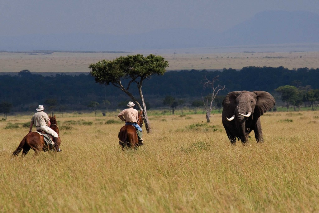horseback safaris riding with elephants with Offbeat Safaris, Kenya