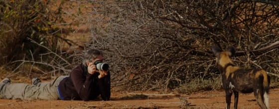 Specialist Photographic Safaris - photographing wild dog at Letaka Safaris Botswana