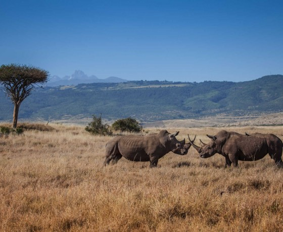 Lewa the conservation success story