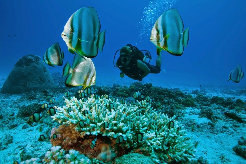 North-Island-Diving-diver-fish-coral-1024