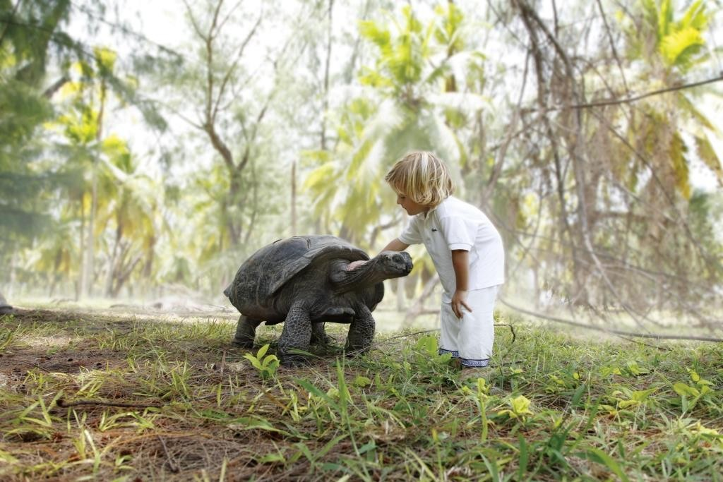 Giant tortoise making a new friend, Desroches Island, Seychelles