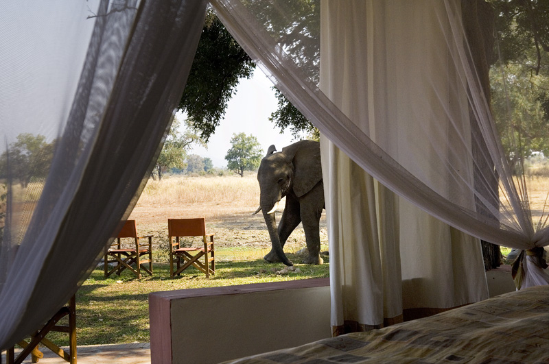 elephant-bedroom-view-Zambia