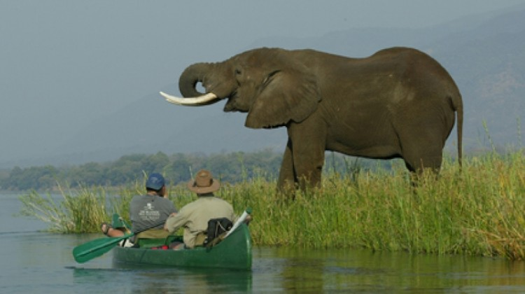 Mana Canoe Trail elephant and canoe safaris