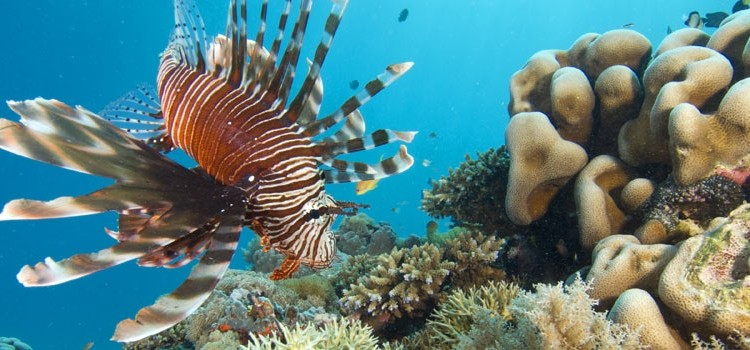 Best African dive sites - lion fish and coral