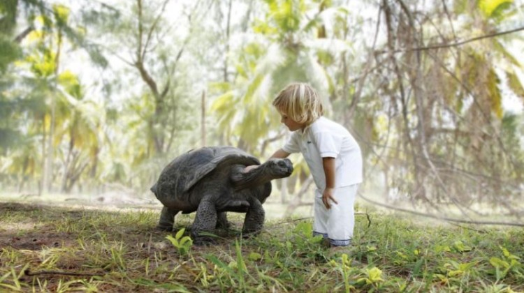 Child with giant tortoise Denis Island