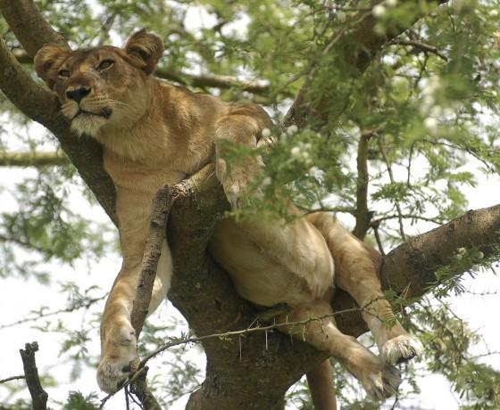 Wildlife bonanza in Queen Elizabeth