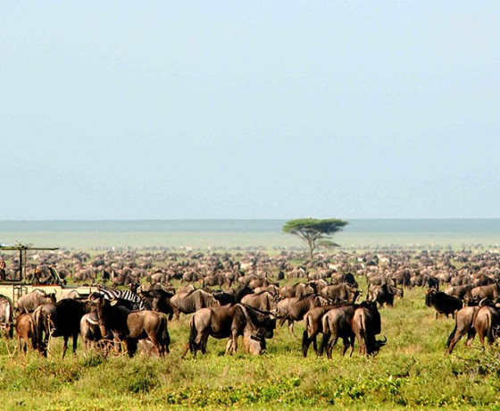 When to see the wildebeest migration