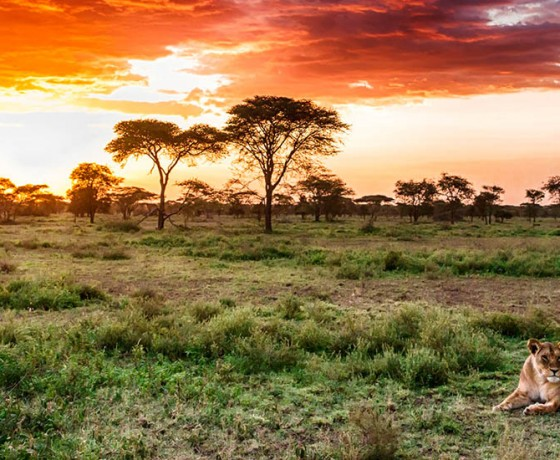 Wildlife viewing in the Serengeti
