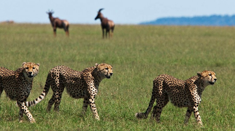 Kenyan Family Safari – Where To Find The Best