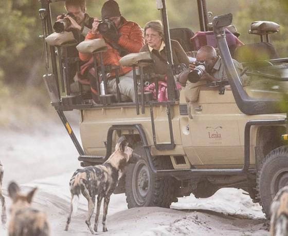 Small group mobile safaris