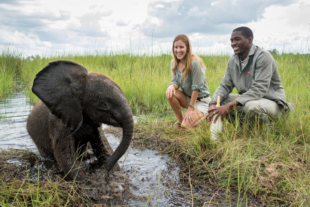 Ceebrating Botswana Abu Camp - Elephant - Dana Allen
