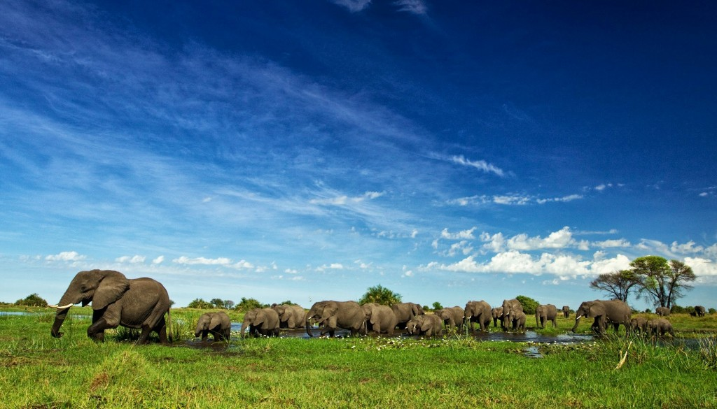 Celebrating Botswana Bots - Duba Plains 2 - Beverly Joubert