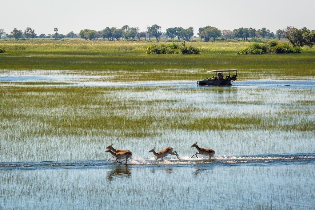 Celebrating Botswana Botswana Jao Game Drive Antelope Landscape (2) Dana Allen