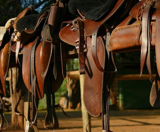 Riding safari tack