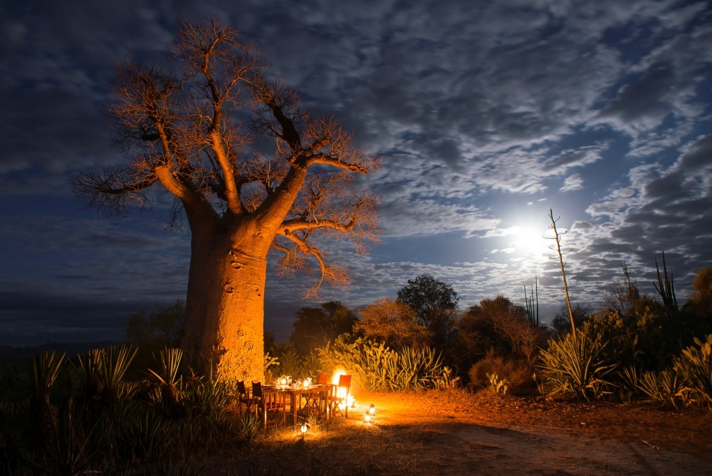 Starlit dinner by a baobab, Mandrare River Camp