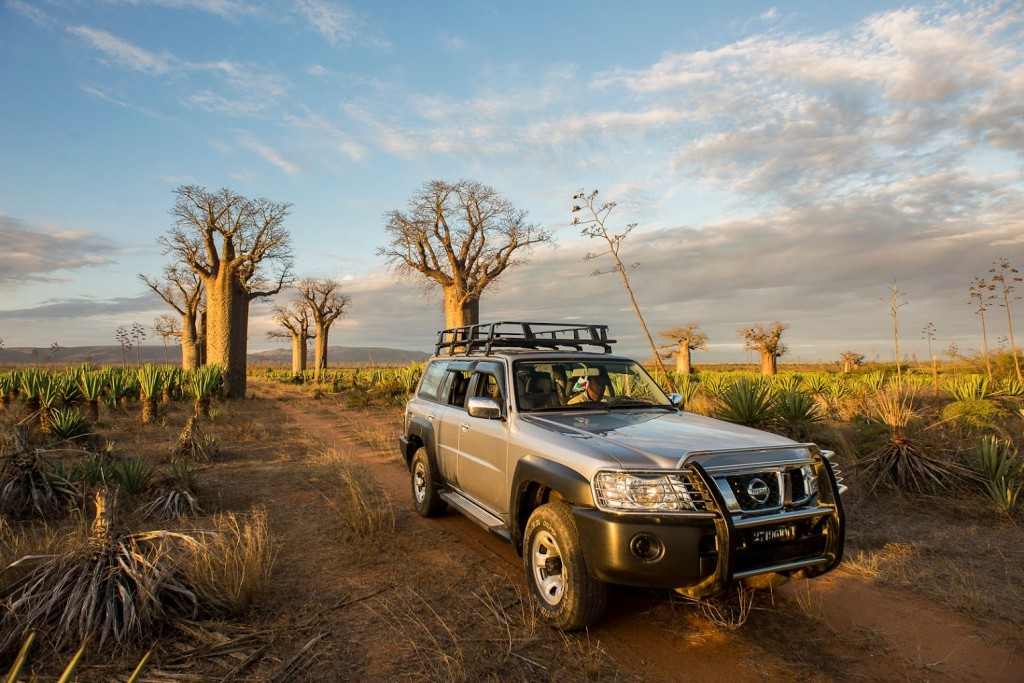 Drive through the baobab trees at Mandrare River Camp