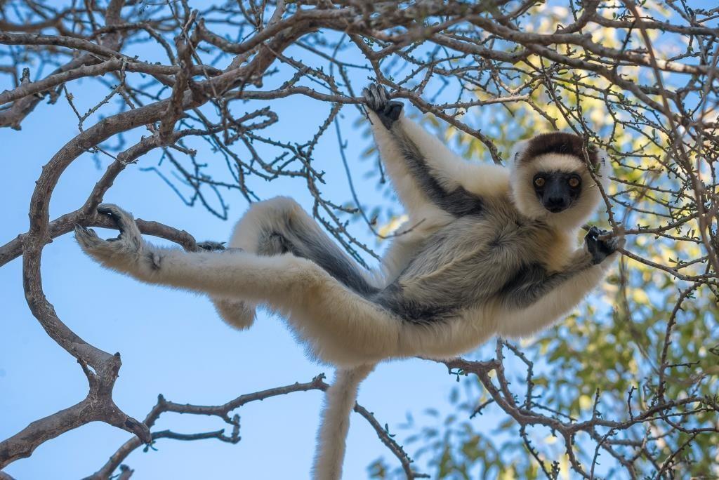 Lemur at Mandrare River Camp
