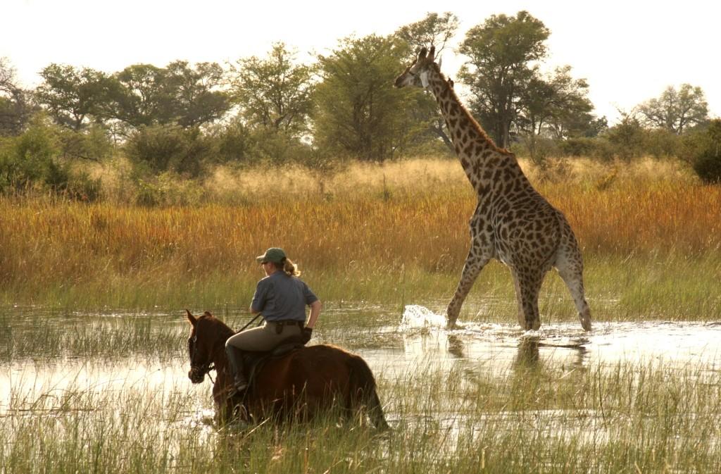Okavango Delta, Okavango Horse Safaris, Botswana.