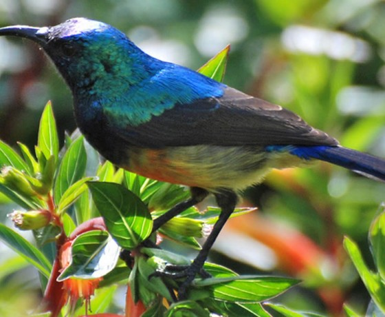 Rwanda's birds