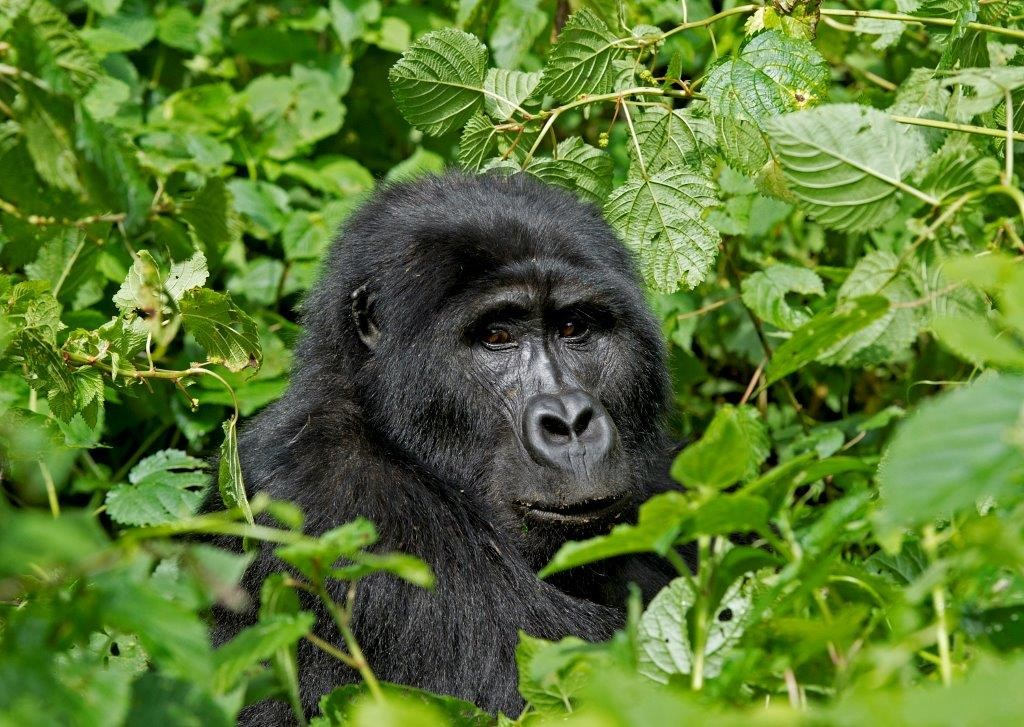 Uganda - Gorilla Forest Camp 1