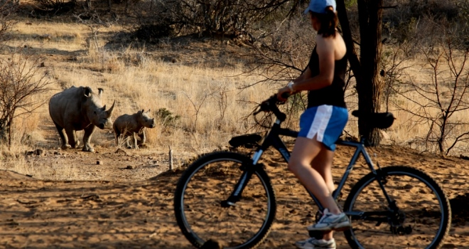 Mountain biking alongside rhino, Ants Collection, South Africa