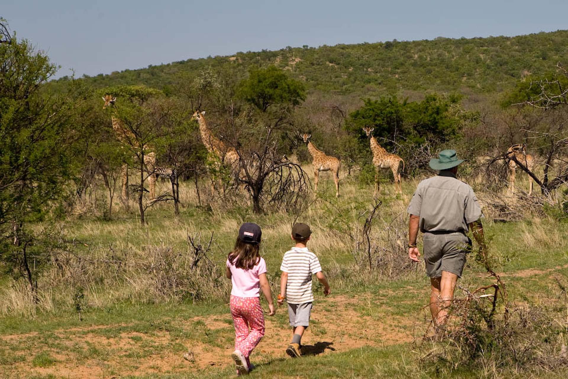 Ant's Nest children's bush walk