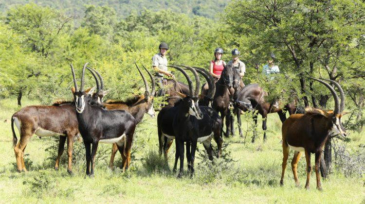 game census safari